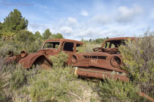Mountain Rust