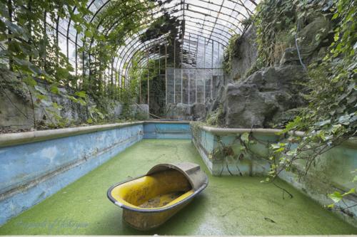 Mosquito Pool